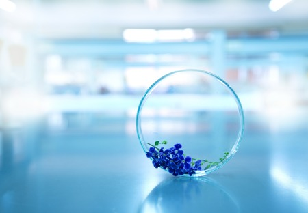 glass petri dish with nature purple flower in biology science laboratory background