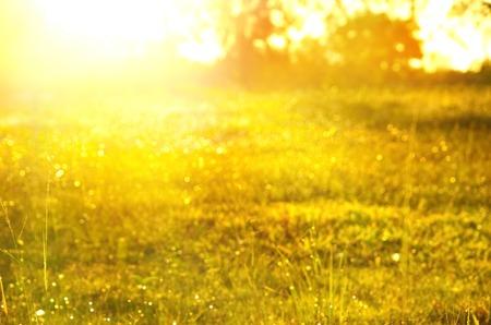 blur orange golden sunlight morning sky nature green grassland or garden summer spring background Banco de Imagens - 88643696