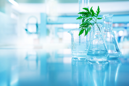 green leave in biotechnology science research laboratory with flask beaker cylinder and water in blue technology background