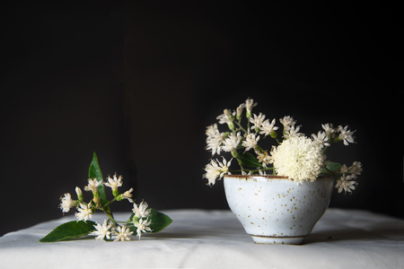 natural white flower with green leaf still life in ceramic cup on white table with black background in rococo classic style 版權商用圖片