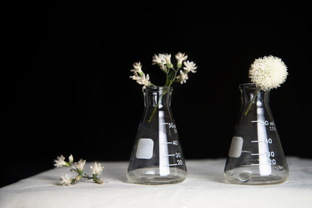 classic retro white flower with science biotechnology experimental research with black background 版權商用圖片