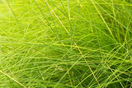 green grass in summer garden meadow field nature background