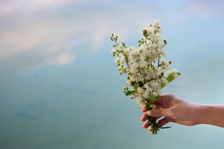 wild bouquet of white blooming flower holding in woman hand with blue water lake summer nature background 版權商用圖片