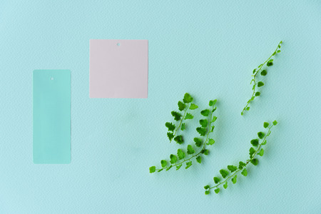 summer fresh green fern plant leave with pink and blue paper label for environmental nature background 版權商用圖片