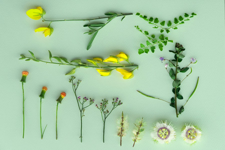 flat lay of several orange yellow purple wild flower and green plant in spring and summer botanical garden background 版權商用圖片