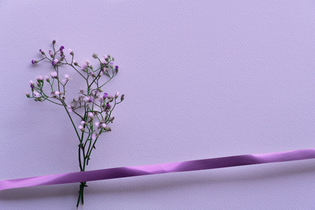 small violet or purple wild flower blooming in spring or summer with ribbon gift nature background 版權商用圖片