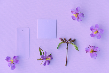 sweet blooming wild purple or violet color flower with paper note for invitation or nature background 版權商用圖片