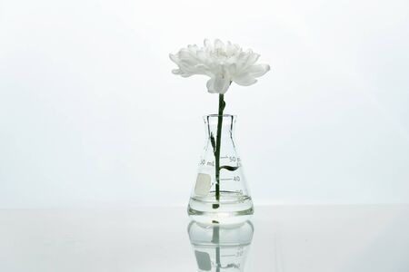 single glass flask with white flower in  water in genetic biotechnology cosmetic science laboratory white background Foto de archivo - 126281219