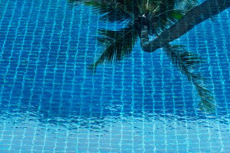 nature beach green coconut tree reflection in blue swimming pool for summer vacation travel background