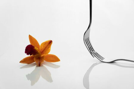 silver fork for food diner resturant and red orange orchid flower reflection on white background