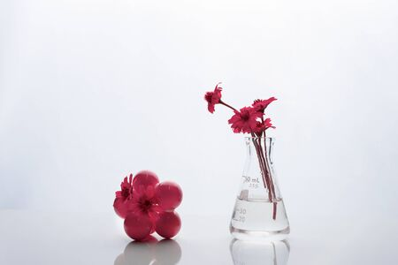 extraordinary nature pink flower in biotechnology science glass flask and molecular structure reflection on table background Imagens