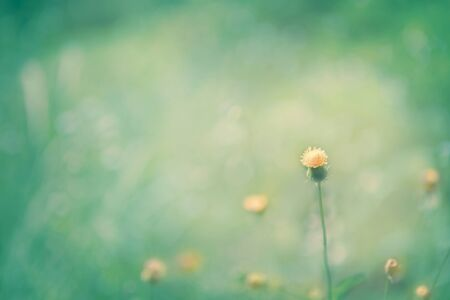cute small orange flower in the soft natural meadow blue green vintage style background