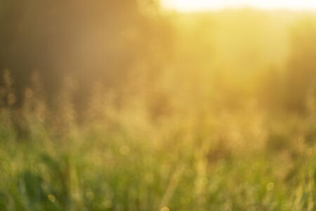 blur green grass in soft morning light meadow field nature background