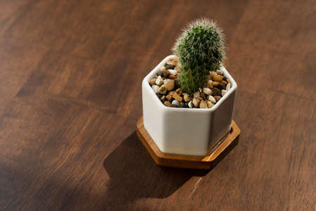 small green cactus plant in white pot on brown wood table garden home decoration background