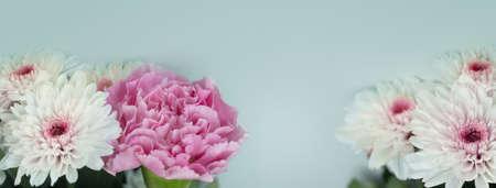 soft natural spring nature white chrysanthemum pink carnation  flower pastel blue banner background