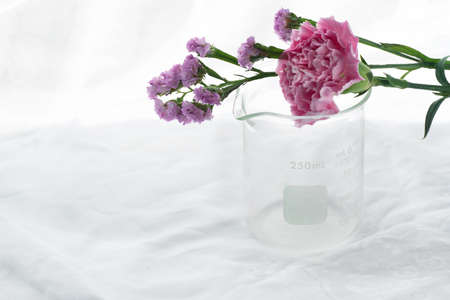 purple pink natural flower with science glass beaker in white cosmetic laboratory background Imagens