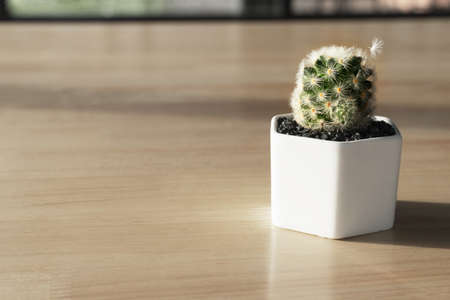 green cactus plant in white pot on wood table interior decoration background