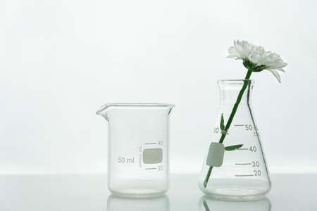 clear beaker and glass flask with white blooming natural flower in science cosmetic laboratory background