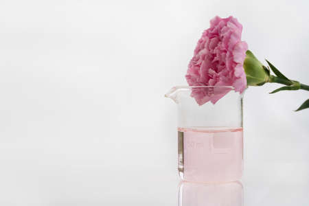 soft pink carnation natural flower with science beaker in white cosmetic laboratory background