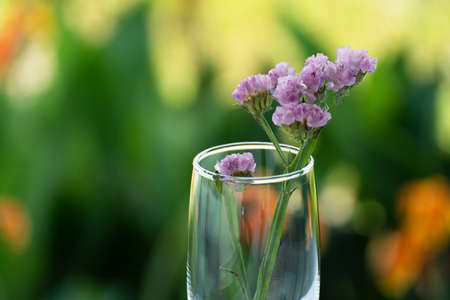 purple small flower in drinking glass with summer morning garden background
