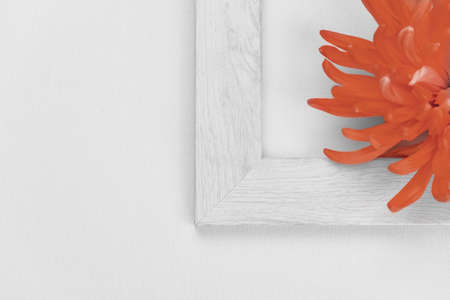 red orange blooming flower with part of white picture frame nature background Imagens