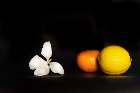 nature fresh yellow lemon and orange tangerine fruit and white flower for food on black background