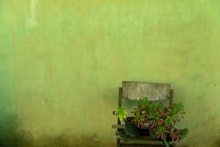 blue green plant on old wood with dirty green wall retro background