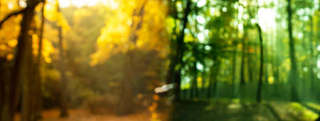 blur summer and autumn tree with morning sunlight in difference season nature landscape banner background Imagens