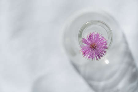 wild round soft pink flower from the top of glass vase on white fabric in natural sunlight background Imagens