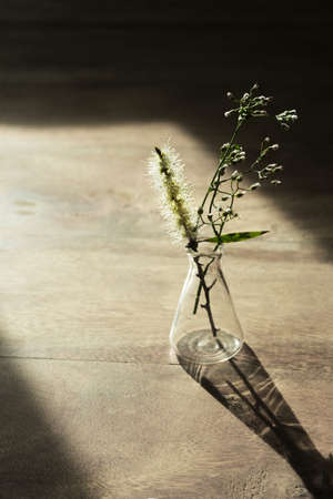 wild flower in glass science flask on nature wood floor natural product science research with sunlight background