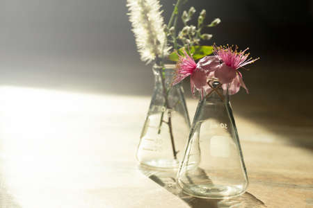 wild pink flower in glass science flask on nature wood floor with sunlight natural product science research background Imagens