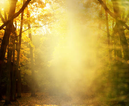 soft mist or fog in autumn yellow orange tree in the park nature background