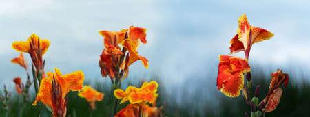 nature red orange exotic flower on blue sky banner background Banque d'images