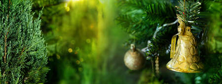 yellow golden bell decoration and orange green pine nature for Christmas banner background