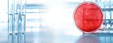 red petri dish for microbiology lab research and glass test tube in blue medical science banner background Banque d'images