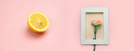 pastel orange pink carnation flower in white wood frame with sliced of yellow lemon nature food banner background