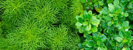fresh green leave in summer garden nature banner background