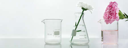glass flask and beaker with pink white flower and green plant biotechnology cosmetic science white web banner background Standard-Bild