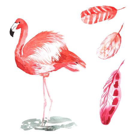 새 Phoenicopterus과 깃털을 포함 손으로 그린 수채화의 집합