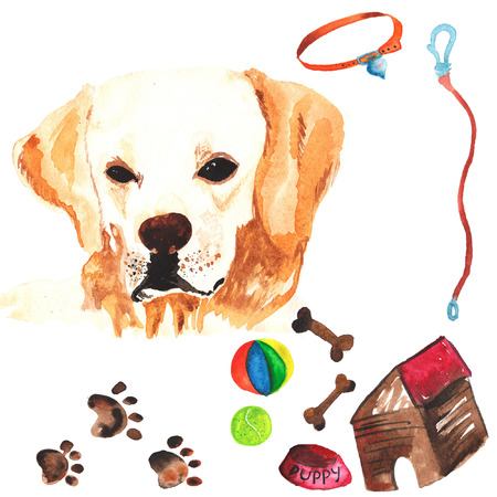 comprising: Veterinary kit comprising Labrador Retriever and accessories for dogs, watercolor, painted by hand Stock Photo