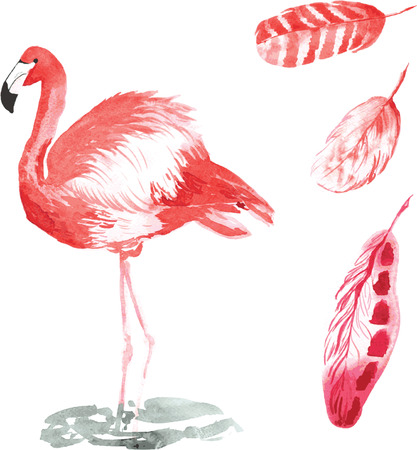 A set of hand-drawn watercolor containing bird Phoenicopterus and feathers