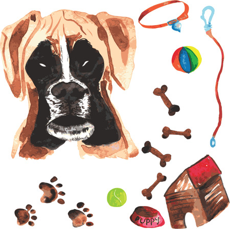 comprising: Veterinary kit comprising boxer and accessories for dogs, watercolor, painted by hand Illustration