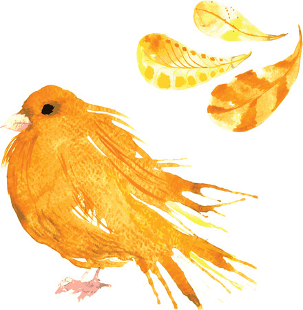 canary: set - watercolor bird canary, hand-drawn sketch of the technique , and feathers Illustration