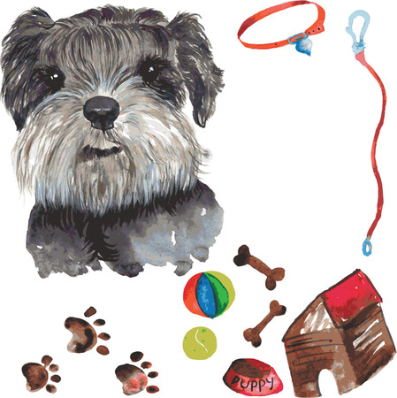 schnauzer: set - miniature schnauzer dog portrait , as well as accessories for dogs - ball and a tennis ball , bones , leash, collar , bowl , box , dog paw marks