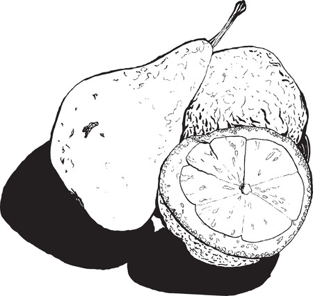transferred: Still , pear and lemon halves , hand-drawn style graphics quality black and white . Transferred texture lemon and small bumps and roughness pears, talking about her style and taste Illustration