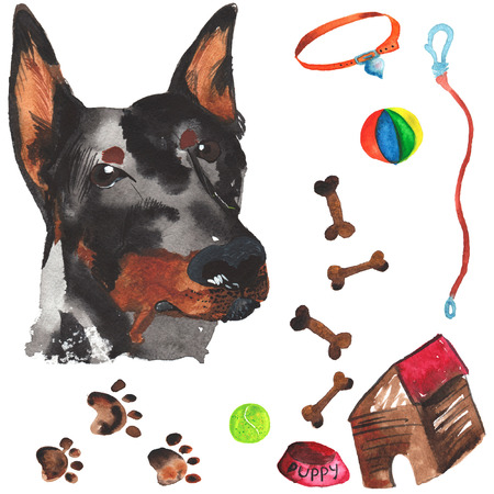 doberman: Veterinary kit comprising doberman and accessories for dogs, watercolor, painted by hand