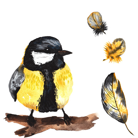 parus: A set of hand-drawn watercolor containing bird Parus and feathers