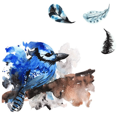 jay: Hand-drawn watercolor bird jay and feathers