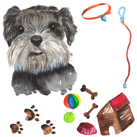 leash: set - miniature schnauzer dog portrait , as well as accessories for dogs - ball and a tennis ball , bones , leash, collar , bowl , box , dog paw marks