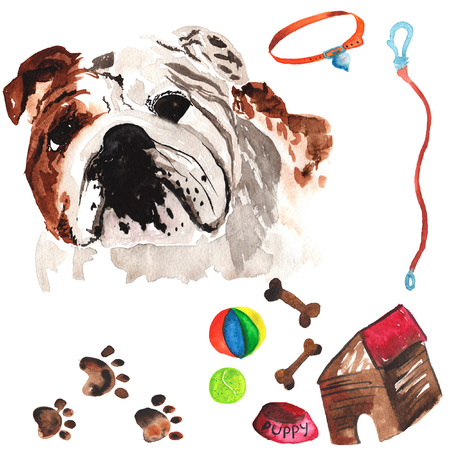 Veterinaire kit bestaande uit Engels bulldog en accessoires voor honden, waterverf, met de hand geschilderd Stockfoto